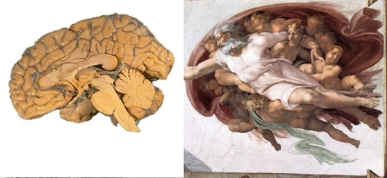 Sistine Şapeli'nde insan beyni mi?